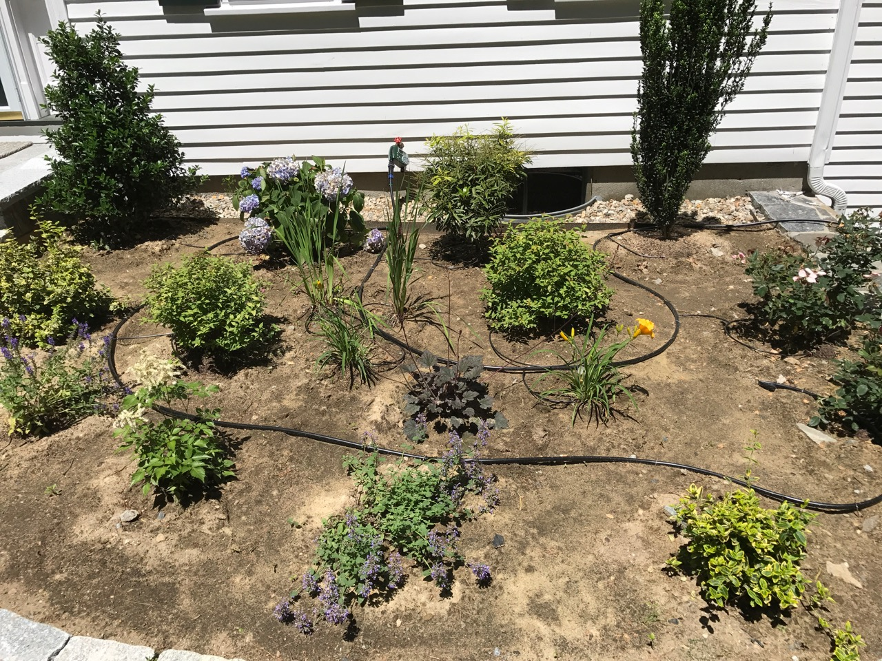 Small Gardens & Urban Yards | Mittra Productive Landscapes